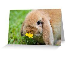 Curious Bunny Greeting Card