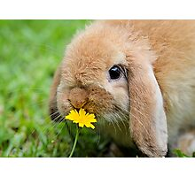 Curious Bunny Photographic Print