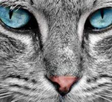 Beautiful Blue eyed Cat Sticker