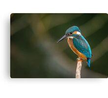 Blue and Orange Bird Canvas Print