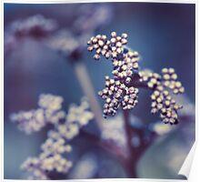 Archipelago Flowers Poster
