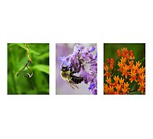 Insects in Action Photographic Print