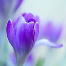 My Purple World by boxx2genetica