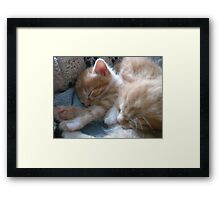 Kittens 2 Framed Print