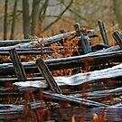 Meandering Cedar Rail Fence by Debbie Oppermann