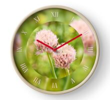Pink chives flowering plants Clock