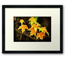 And So It Begins...Autumn Framed Print