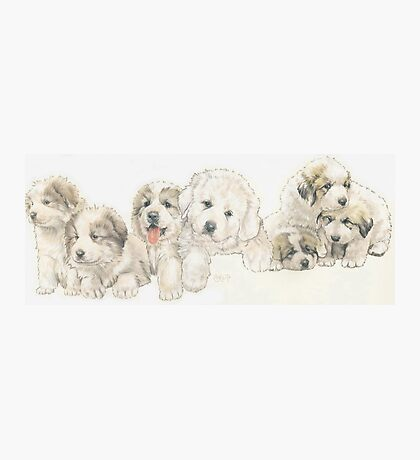 Great Pyrenees Puppies Photographic Print