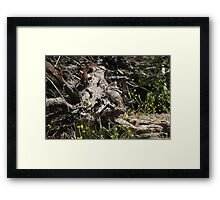 Went on Squirrel Hunt Framed Print