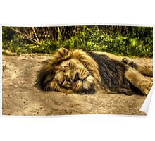 The Lion Sleeps Poster