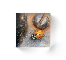 Ladybug, beetle, screw, macro, micro, coccinellidae Acrylic Block