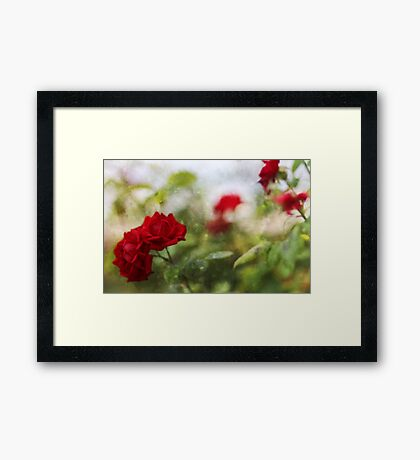 Roses are Red ...... Framed Print