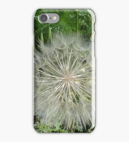 Salsify iPhone Case/Skin