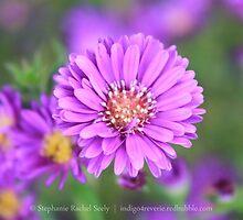 Quiet Purple by Stephanie Rachel Seely