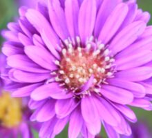 Quiet Purple Sticker