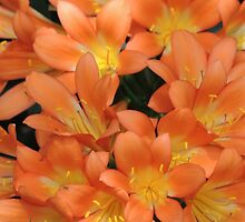 Clever Clivia by ScenerybyDesign