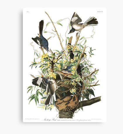 Mockingbird - John James Audubon Canvas Print