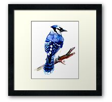 Watercolor blue jay  Framed Print