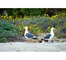 Southern California Sea Gulls Photographic Print