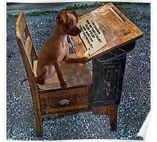 AS I WRITE MY THOUGHTS I WONDER WHY THEY..?? CANINE,DOG,chihuahua >>PICTURE.. Poster