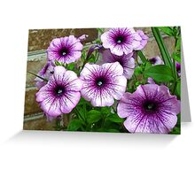 Beautiful Purple and White Flowers Against Brick Greeting Card