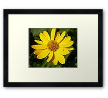 Yellow blossom with green leaves  Framed Print