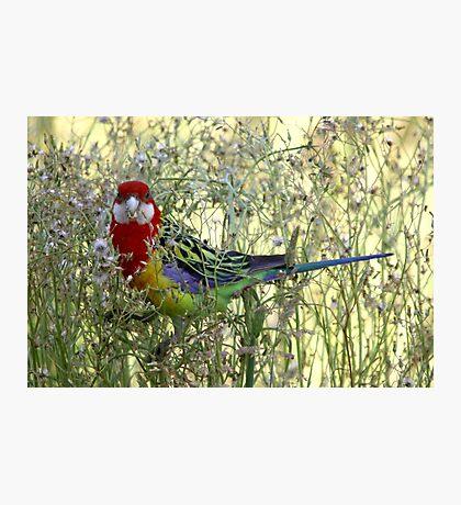 Birdy Num Nums Photographic Print