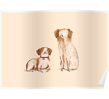Brittany Spaniels Poster