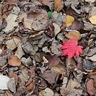 Autumn Leaves With One Red Leaf by Sue Robinson