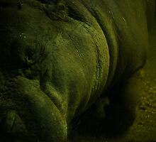 Sleeping Hippopotamus  by Charlotte Pridding