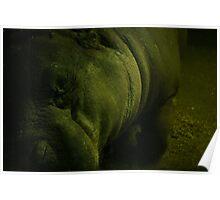 Sleeping Hippopotamus  Poster