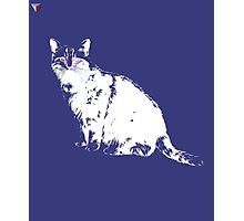 White Cat for Kitten Cat Lovers Artwork T-Shirt by Cyrca Originals Photographic Print
