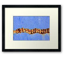 Tiger Snake Framed Print