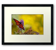 monarch on yellow Framed Print