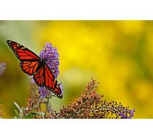 monarch on yellow Photographic Print