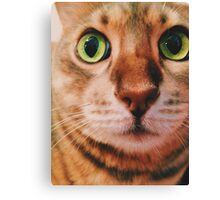 Blueberry the Cat Canvas Print