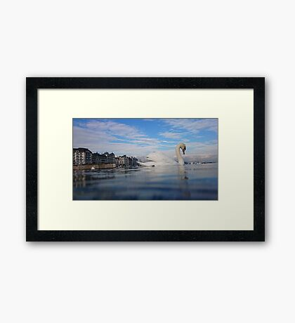 swan in lake geneva Framed Print