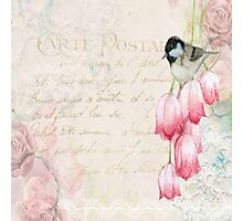 Vintage collage, flowers,bird,carte postal,text,parchment,vintage,old,rustic,modern,trendy Photographic Print