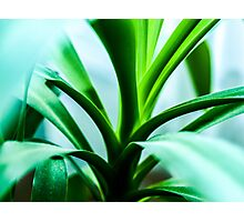 Green plant Photographic Print