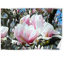 Pink Bloom    ^ Poster
