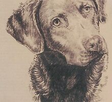 Chesapeake Bay Retriever by BarbBarcikKeith