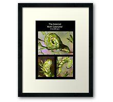 The Asteroid Moth Caterpillar Framed Print