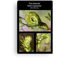 The Asteroid Moth Caterpillar Canvas Print