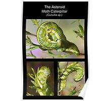 The Asteroid Moth Caterpillar Poster