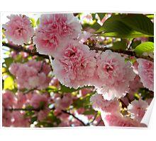 Cheery Cherry Blossom Tree  ^ Poster