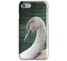 Baby signet swan iPhone Case/Skin
