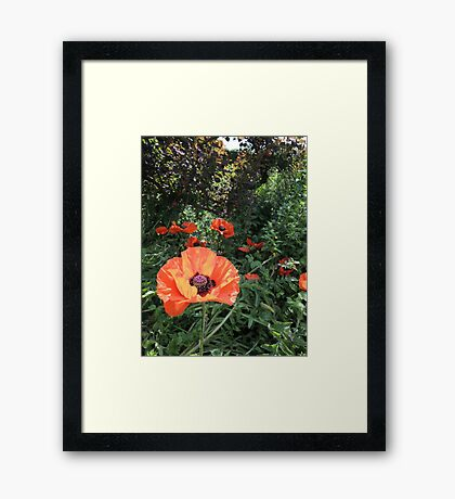 Scarlet Purse of Dreams Framed Print
