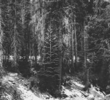 snow at Sequoia national park, USA in black and white Sticker