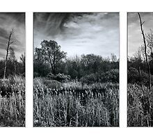 The Marsh triptych by PhotosByHealy