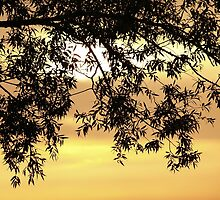 Sunset behind the tree by 60nine